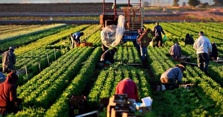 Çiftçiye 13,5 milyon TL devlet desteği