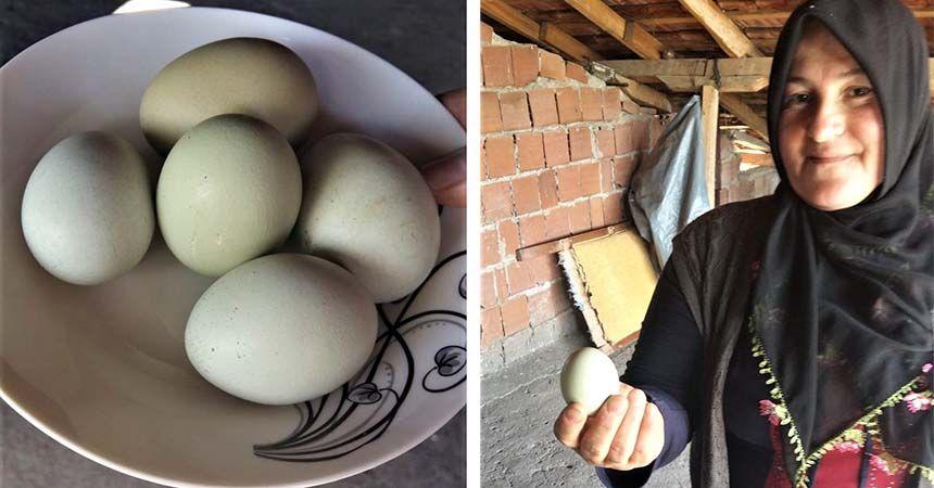Kadın girişimci mavi yumurta üretecek