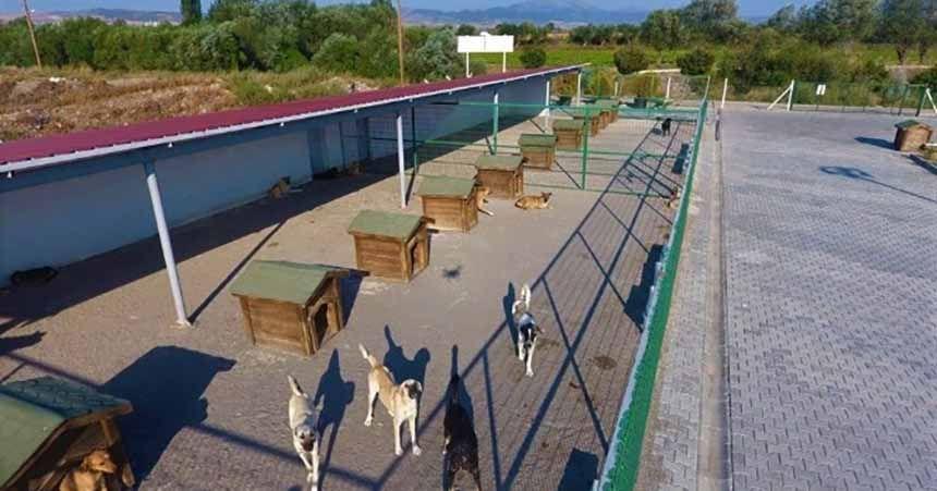 Sokak hayvanlarının tedavisi için iş birliği