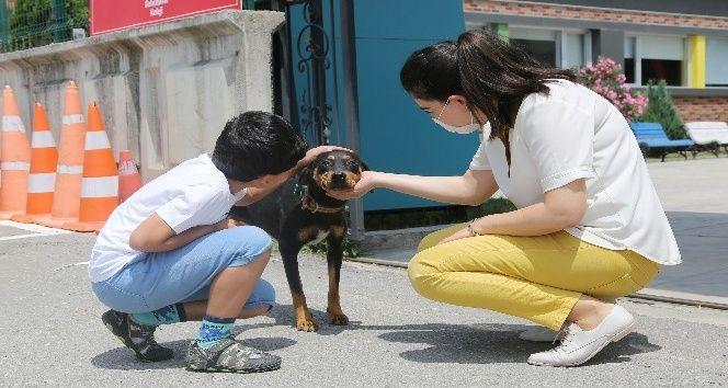 Atakum'da hayvanlara yardım