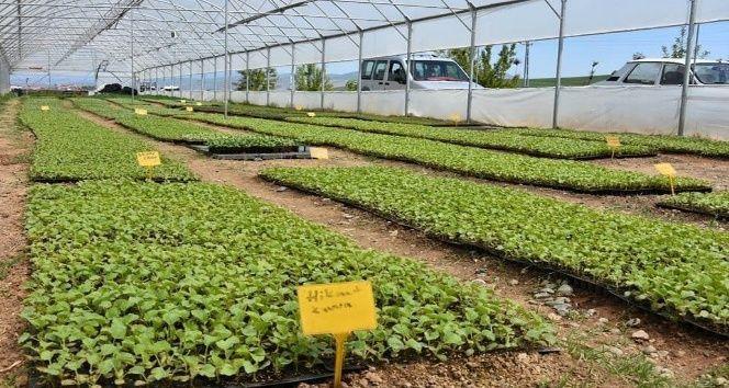 Büyükşehir'den tohum desteği