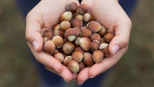 Ferrero çocuk işçiliğinin karşısıda