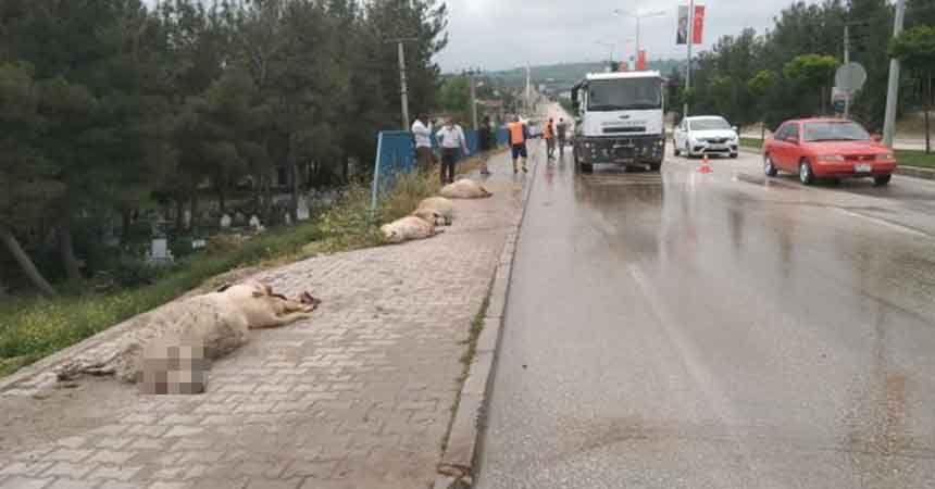 Kamyonet 17 koyunu telef etti