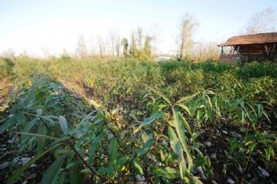 Şeftali üretimi geri dönüyor