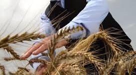 TARSİM'den çiftçiye 9 milyon destek
