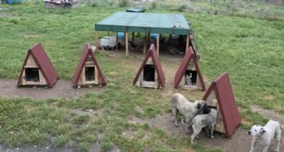 Hayvan kulübesine Demirtaş'tan destek